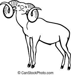 Mouflon Wild Sheep