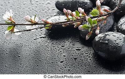 mouillé, sakura, zen, fleur, pierres, spa