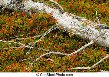 Mouldering spruce lay down on the color bed of nature.