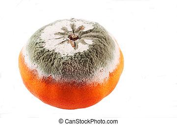 mouldy, תפוז