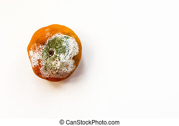 Mouldy Rotting Tangerine Background - Horizontal image of a...
