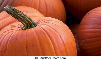 moule, maxima, rouges, halloween, coup, tas, cucurbita, potirons