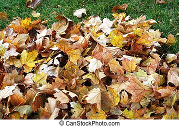 Mound of Leaves