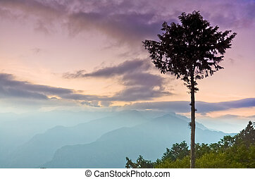 Mount Ali Sunrise with a tree and mountain,Alishan National...