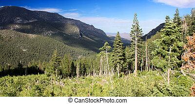 Mount Charleston Landscape Nevada