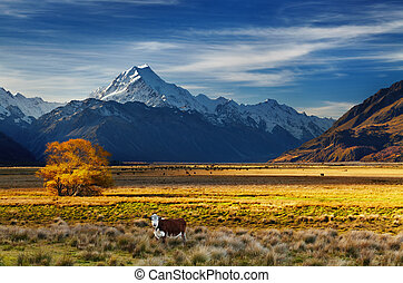 Mount Cook, Canterbury, New Zealand