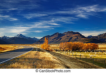 Farmland with grazing sheep and Mount Cook on background, Canterbury, New Zealand