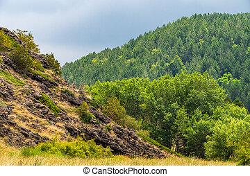 Mount Etna volcanic landscape and its typical summer vegetation