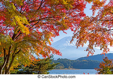 Mount fuji in autumn at Kawaguchiko