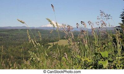 Mount Hood in Sandy Oregon 1080p - Mount Hood with Wild...