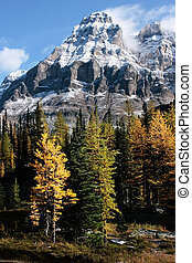 Mount Huber and Opabin Plateau, Yoho National Park, Canada -...