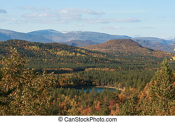 mount in norge. trevel. lake in forest