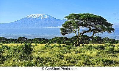 Mount Kilimanjaro in Kenya Amboseli National Park