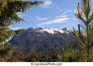 Cloudy Mt Kinabalu Peaks from forest below