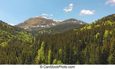 Mount Petros peak and beautiful forest, Carpathian...
