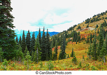 Mount Rainier, Washington - Mount Rainier national park,...