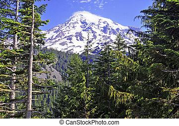 Mount Rainier, Washington USA