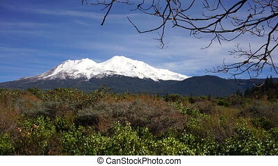 Mount Shasta Blue Skies Panoramic - Tree branches sway in...