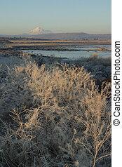 Mount Shasta Sunrise - Sunrise light hitting the frost of ...