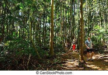 Mount Tamborine Gold Coast Queensland Australia - GOLD...