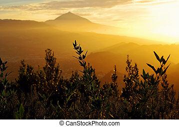 mount Teide in yellow sunset light