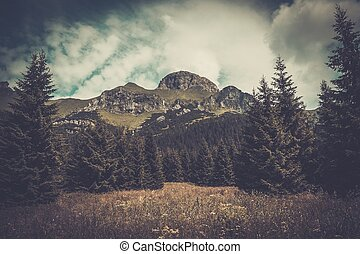 Mountain among beautiful forest in Tatras