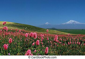 Mountain Ararat, Armenia.