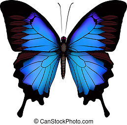 (mountain, arrière-plan bleu, isolé, papillon, ulysse, ...