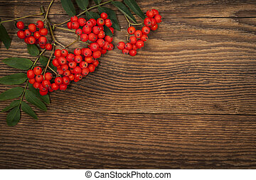 Mountain ash berries over wood - Red mountain ash or rowan...