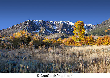 Mountain Autumn Colors