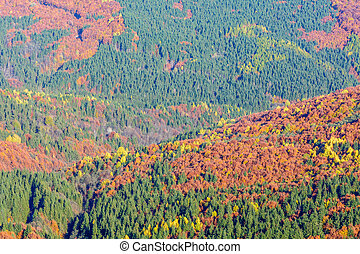 Mountain autumn landscape with colorful forest. Horizontal panoramic background over colorful mountain forests with green, violet, brown, orange, yellow tones.