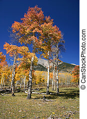 Mountain Autumn Scene