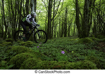 A man ridding mountain bike in a green forest