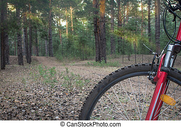 Mountain bike ready to go on a trail in the woods with sunrise background.