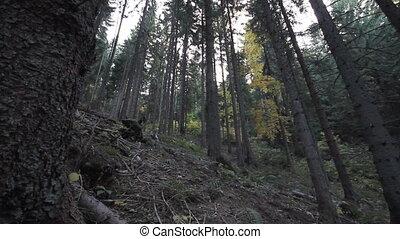 Mountain biker riding in wood