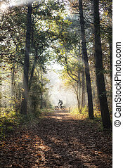 Mountain biking in the forest