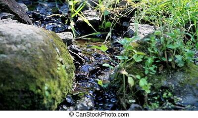 Brook - mountain Brook