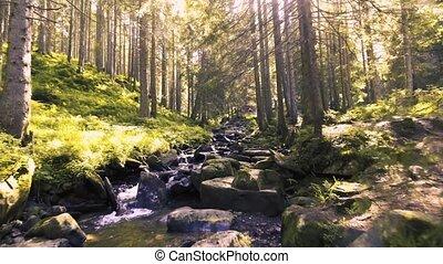 Mountain creek in a coniferous green forest - Mountain creek...