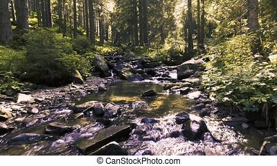 Mountain creek in a coniferous green forest
