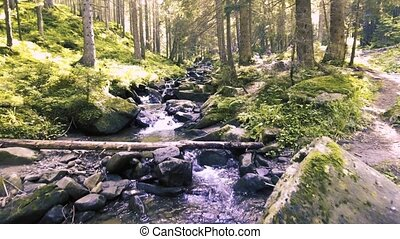Mountain creek in a coniferous green forest