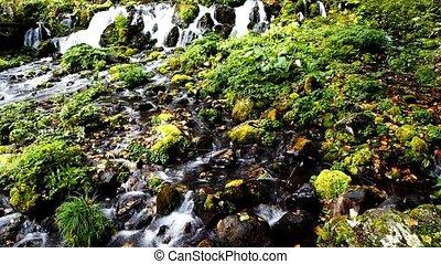 Mountain creek in hokkaido japan