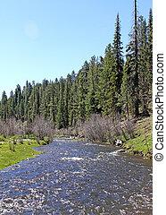 Mountain creek in spring 1