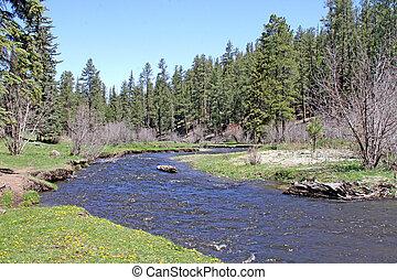 Mountain creek in spring 3