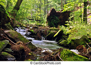 Mountain creek in the forest with long exposure