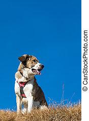Mountain dog harness