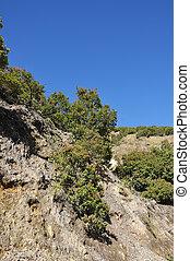 Mountain Flora