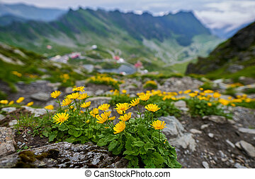 Mountain flowers with lake in background