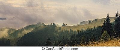 Mountain foggy sunrise - Carpathian mountains summer vintage...