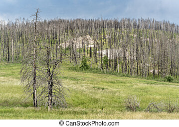 mountain forest after wildfire