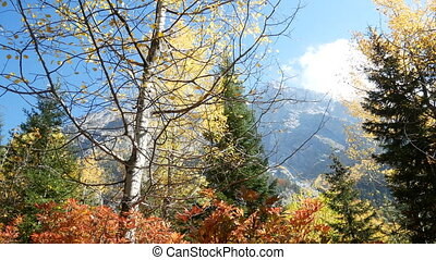 Mountain forest branch autumn - Magical mountain forest with...